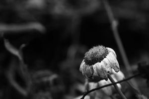 I do not forget you by LPeregrinus