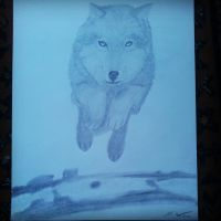 Jumping Wolf by Carlitos-Girl