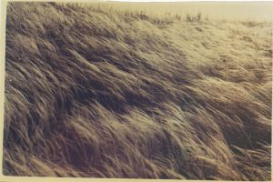 feather grass by andrewpershin