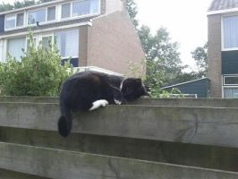 Sleeping Cat On Fence by MadnessTroll