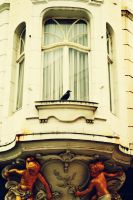 window crow by MaithaNeyadi
