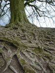 Routes or roots? by Spiralshaman