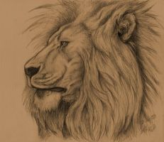 lion sketch by albertoaprea