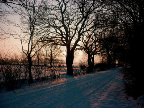 Trees in the snow by lmsgblh