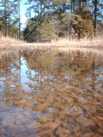 Puddle Stock 6 by Noxtu-Stock