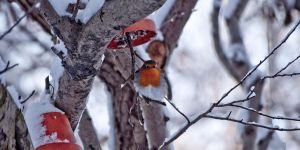 Winter Bird by Zuggamasta