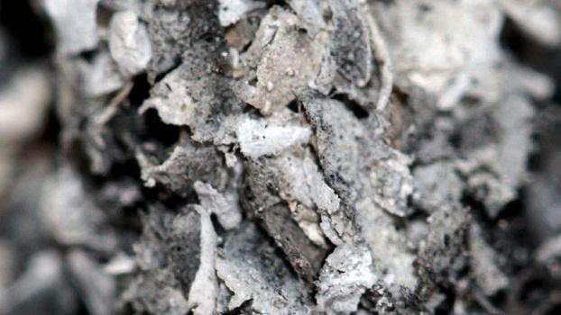 Tobacco Ash Macro Photo by shadedancer619