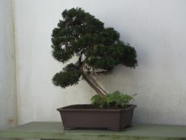 Banzai Tree 1 by In2FF7
