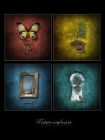 Metamorphosis Series by ThisYearsGirl