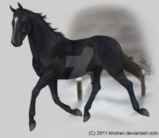 VHR- Black Thoroughbred by Kholran