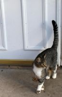Cat by Door by RebekahByland