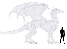 Dragon Reference sheet WIP by anonymous-Dragon