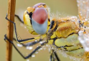 compound eye by MartinAmm