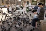 Doves by marius1956