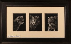 Feline Finesse - Framed by Misted-Dream