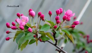 Spring buds by gigi50