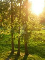 Three Trees in the Sun by melissaleahmp
