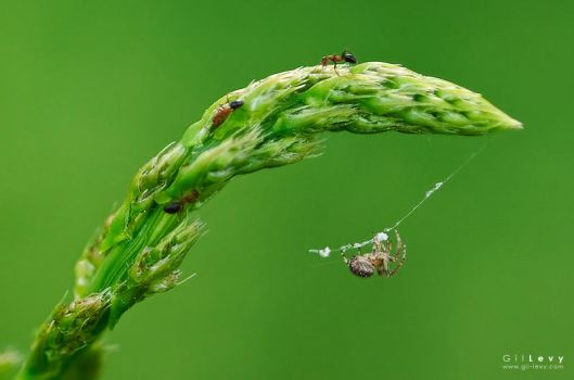 A Tale of a Spider and 3 Ants by Gil-Levy
