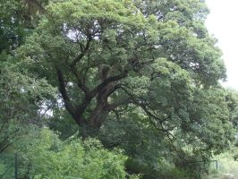 Tree by fairling-stock