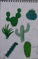 Cactus by AliceSeixas