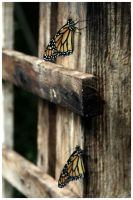 butterfly farm 6 by x-vixen-x
