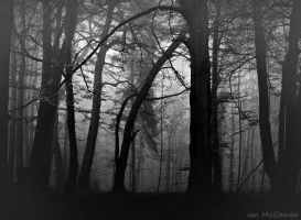 Fog in the forest . by 999999999a