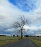 Tree Along The Road by jim88bro