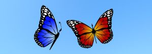 Butterfly Banner by FirstPrimeOfCessna