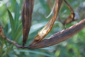 Seed Pod by ReSaturate