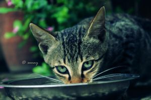 Cat 4 by sunnybarjatya