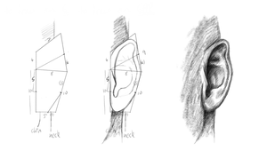 Ear Study Steps - MyPaint by Gemneroth