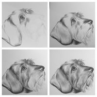 Dog Sketch by AndyVRenditions