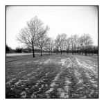 2014-335 My friends, the trees - scan0112 by pearwood