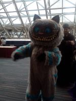 Cats cosplay by Sinta54