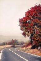 Autumn Road by valiunic