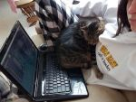 Sleeping Kitty by Shewen