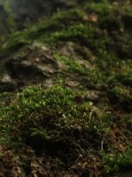 The Magical Moss by Willow-0