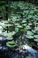 Down The Waterline by Alexandru1988