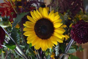 Sunflower (No Lens) by Singing-Wolf-12