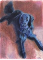 Flat Coated Retriever by Half--the--Fun