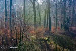 A Forest - XIII by 666gothika666