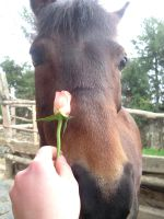 Olga with a rose4 by Promiseoftheraven