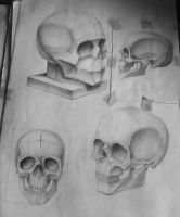 Skull drawing by InkOut