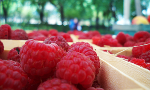 Raspberries by picklenation