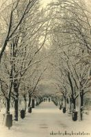 winter path... by Iulian-dA-gallery