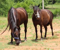 Multiple Horses 19 by MountainViewStock