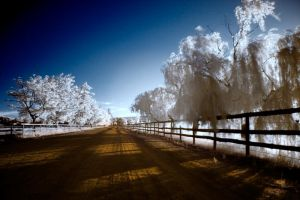 Fluffy Willows by hougaard