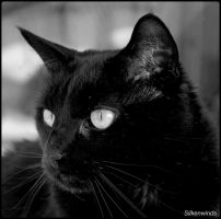 For The Love Of Cats 13 by SilkenWinds