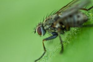 Fly (Close-up) by grini