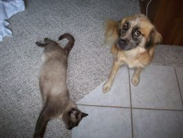 My dog Ginger and cat Rollo by Zeldabloom101